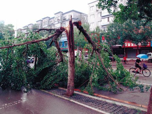大树被劈倒