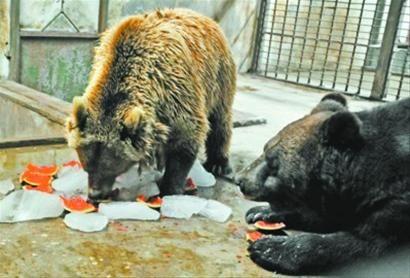 """""""要不是亲眼看到,真难相信,这棕熊也是个'妻管严'啊!"""""""