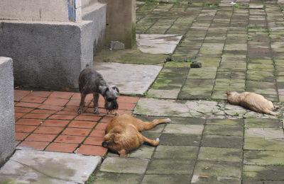 在两个玩伴的尸体旁,一只狗久久不愿离去,此情此景,令人动容