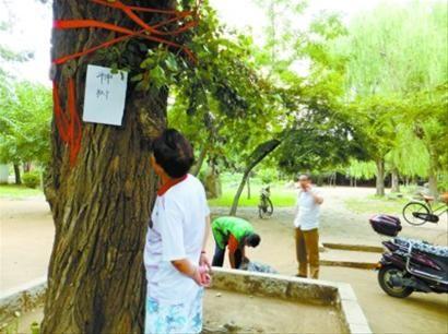 """昨日,在铁西劳动公园,这棵传说中的""""神树""""被算命先生利用骗钱。 记者 王迪 摄"""
