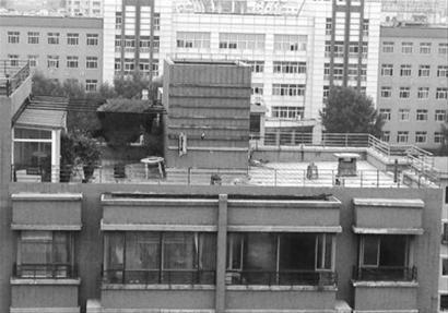 昨日上午,8层楼的楼顶花园里能看到花草和一条大狗。 记者 韩宇 摄