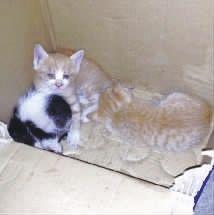 ,一只老鼠冲进猫窝咬死了3只猫崽,4只小猫仅剩1只。(网友供图)