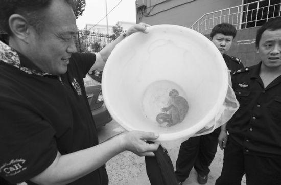 这个大桶扣住了松鼠猴。半岛晨报、海力网摄影记者孙振芳