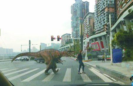 恐龙在街头游荡 网友图