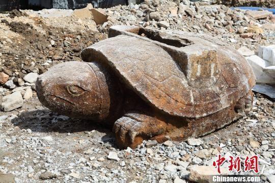 温岭出土的明代龟趺。 金云国 摄