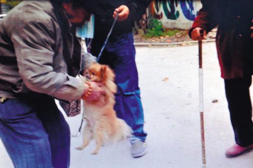 被解救回的小狗