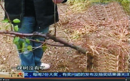 因为嫌小,窃贼把小的果树遗留在现场。