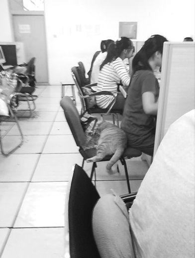 """大工""""监考猫""""霸占女学生的座位。(微博截图)"""