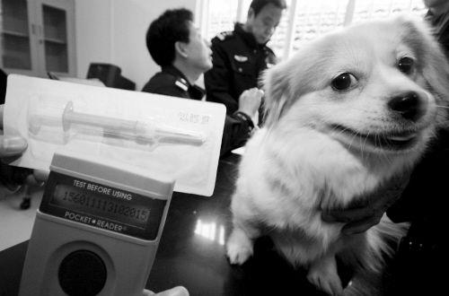 南京已为宠物狗植芯片