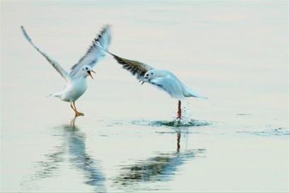 海洋生态效应显现