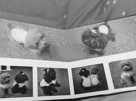 """网友""""约塞Mi蒂""""在微博上晒出的宠物狗写真。(微博截图)"""