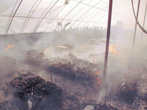 被烧得只剩铁架子的花卉大棚。