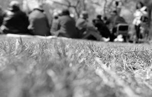 在南湖公园,市民坐在刚发芽的草坪上聚餐 ■华商晨报 华商响网记者 张贺然 摄