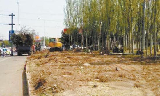 北运河部分树木被迁移