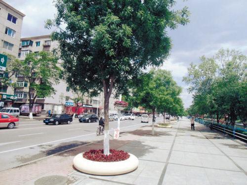 马路上的大树栽在盆里