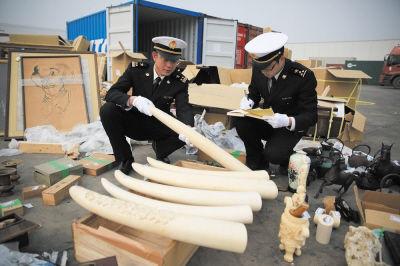 大窑湾海关查获大量象牙及象牙制品。