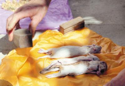 猫妈妈被毒死后,3只小猫饿死了。