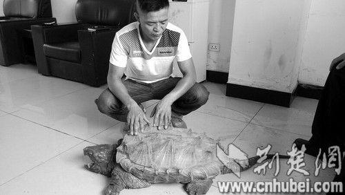 图为:吕先生与鳄鱼龟