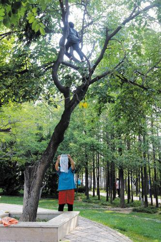 孩子爬5米高树摘桑葚 妈妈在树下帮忙(图)