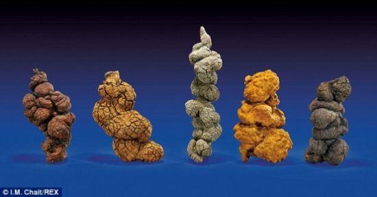 古时海龟五份粪便样本也将拍卖