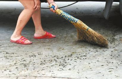 一位居民清扫一地的毛虫尸体