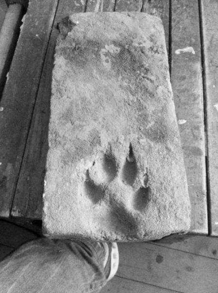 专家认为砖上的动物脚印是狼的可能性较大