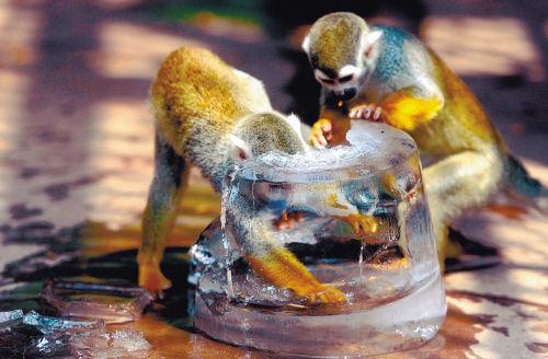 棋盘山野生动物园每天耗资2万元为镇园之宝们防暑降温。