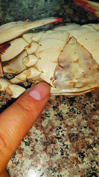 早市买回6只螃蟹 4只肚子有小孔