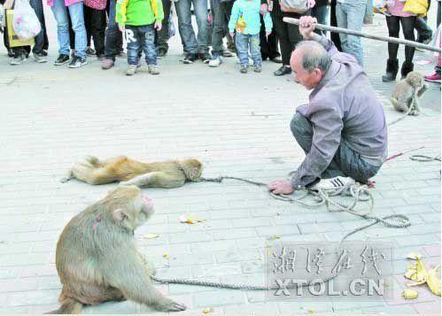 耍猴人当街暴打猴子,引起围观市民的反感。(竖戈摄)