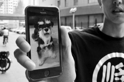 手机里的小狗就是出事的石头