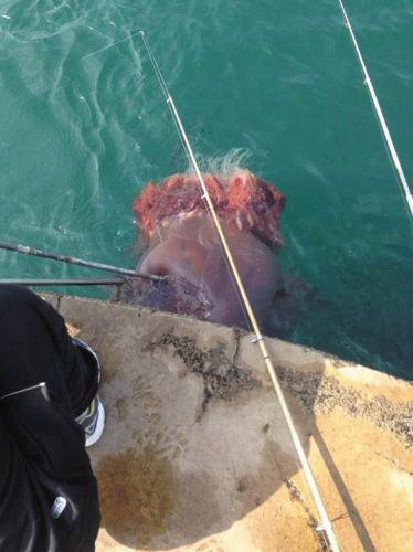海蜇被打捞出水。
