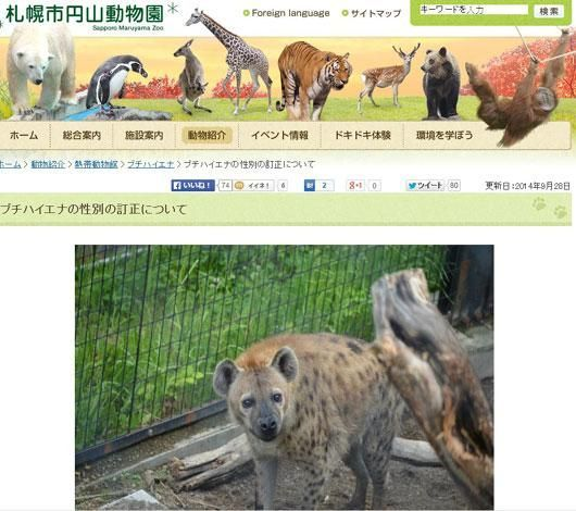 日本圆山动物园修正土狼性别。