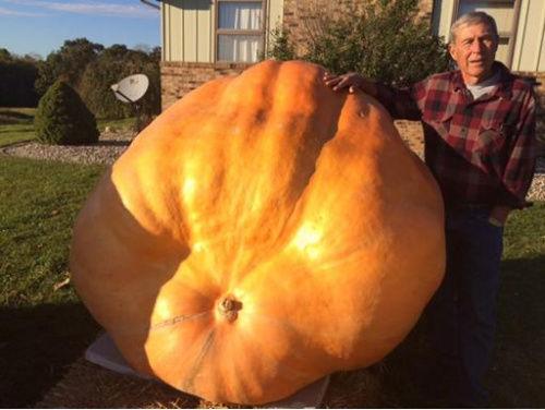 爱德华兹和他的重达619公斤的巨型南瓜。