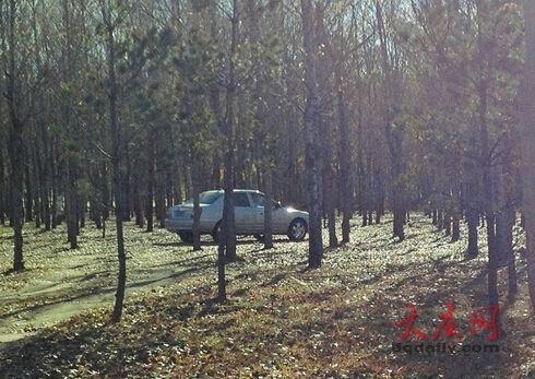"""树林里""""车震""""男女的车"""