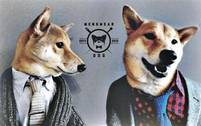 据美国媒体17日报道,美国纽约4岁柴犬Bodhi在纽约时尚圈非常有名