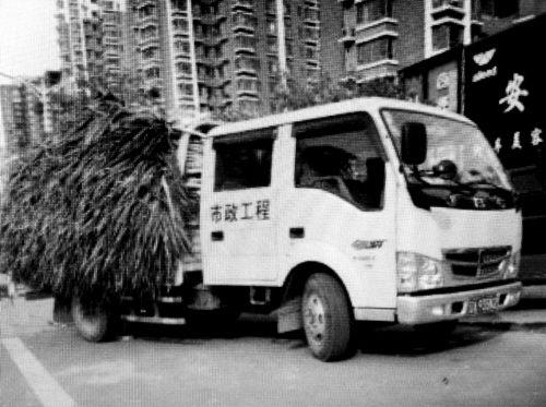"""印着""""市政工程""""字样,这车卖大葱?"""
