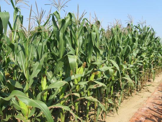 远大并购以色列农业技术公司在美国创业大赛摘银