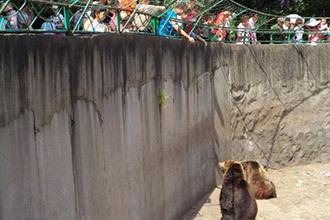 抚顺动物园50多种动物