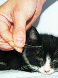流浪猫被小学生扎6根钢针