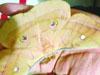 活茧蛹变蝴蝶