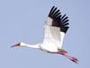 法库千只白鹤飞舞