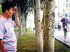 杨树被刻污言秽语
