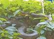 公园突现黑色长蛇