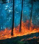 目击一场森林大火