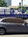 沈阳上千只蜜蜂包围汽车