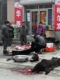 商户路边宰杀毛驴卖肉