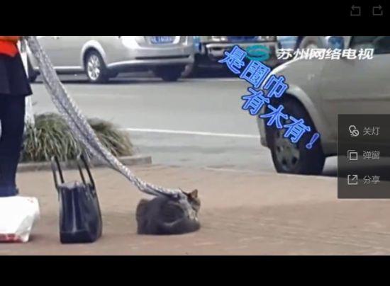 实拍奇葩女汉子用围巾遛猫